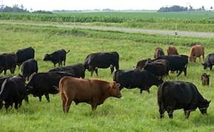 wallace family farm
